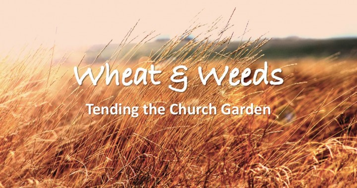 Wheat & Weeds: Tending the Church Garden